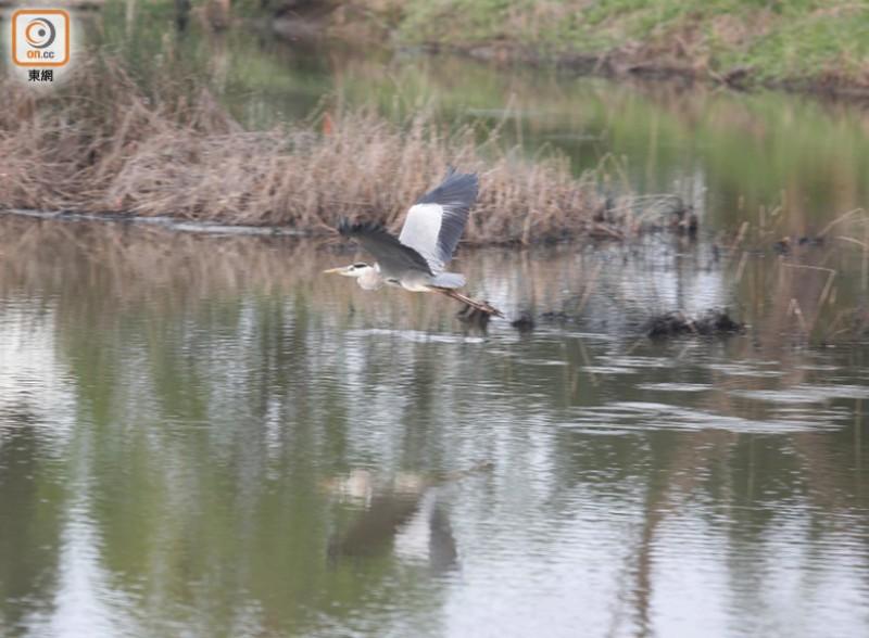 米埔自然保护区每年秋冬会迎来大批候鸟南下过冬