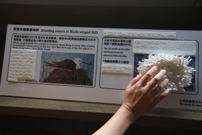 观鸟屋内增设雀鸟模型及点字板,桌椅高度亦经过特别调较,方便残疾人士