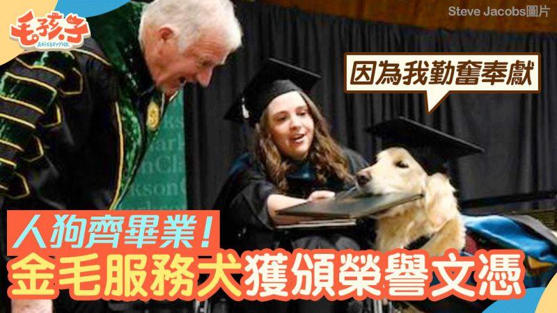 與坐輪椅主人100%出席大學課程 金毛獲頒榮譽文憑 表揚無私奉獻