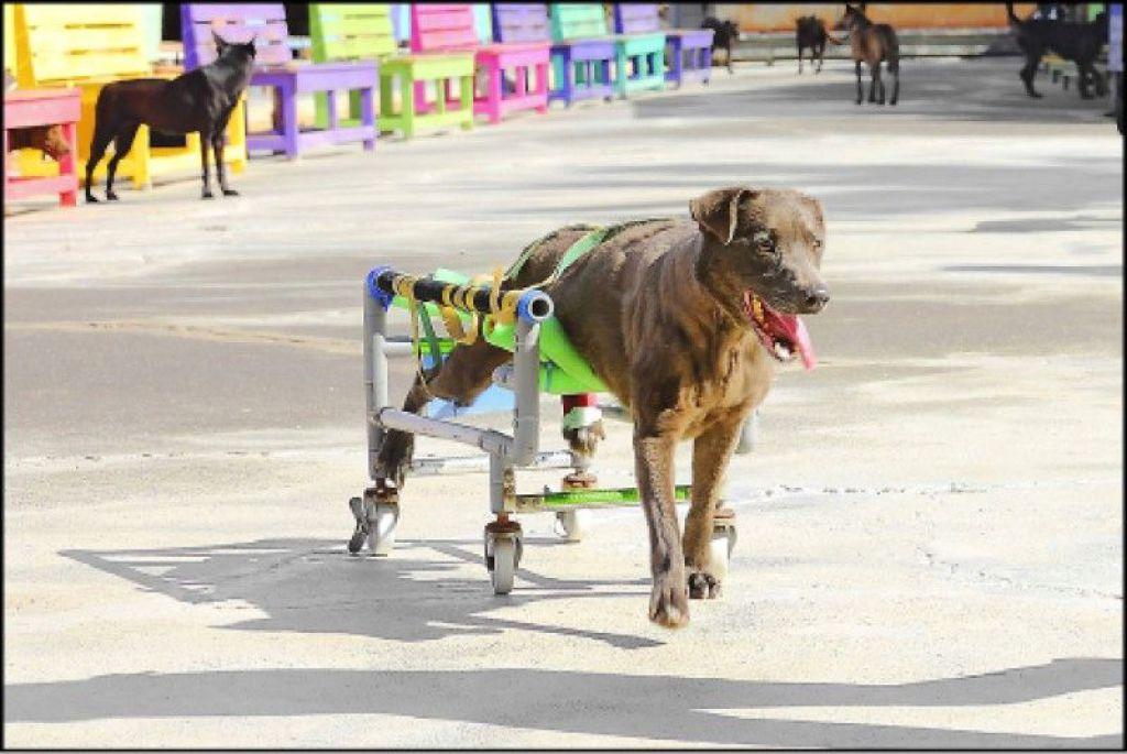 瘫痪的狗狗有了宠物轮椅,总算能重拾奔跑的快乐